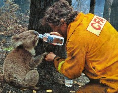Australia Wildfire Relief